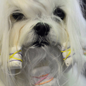 Backstage at the 137th Westminster Dog Show looks awesome as hell!